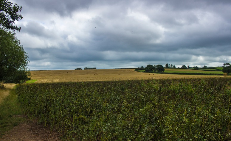 Somerset - Fields & Stormy Skies