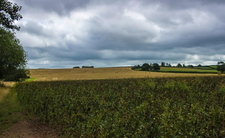 Somerset - Fields & Stormy Skies