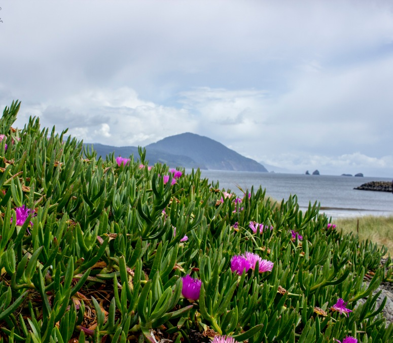 Oregon Coast - Flowers, sea and mountains