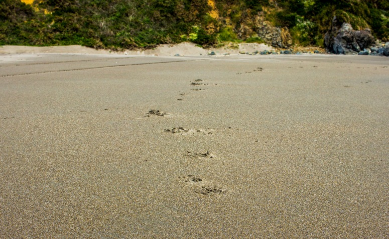 Oregon Coast - footprints in the sand