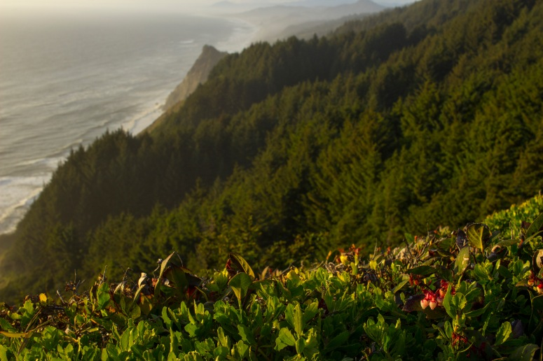 Oregon Coast - layers of mountains and sea